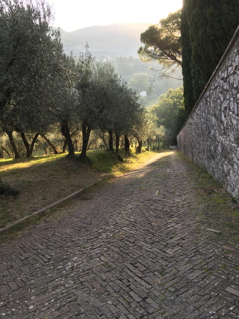 San-Damiano-Path-2019_BYJOANCOOGAN